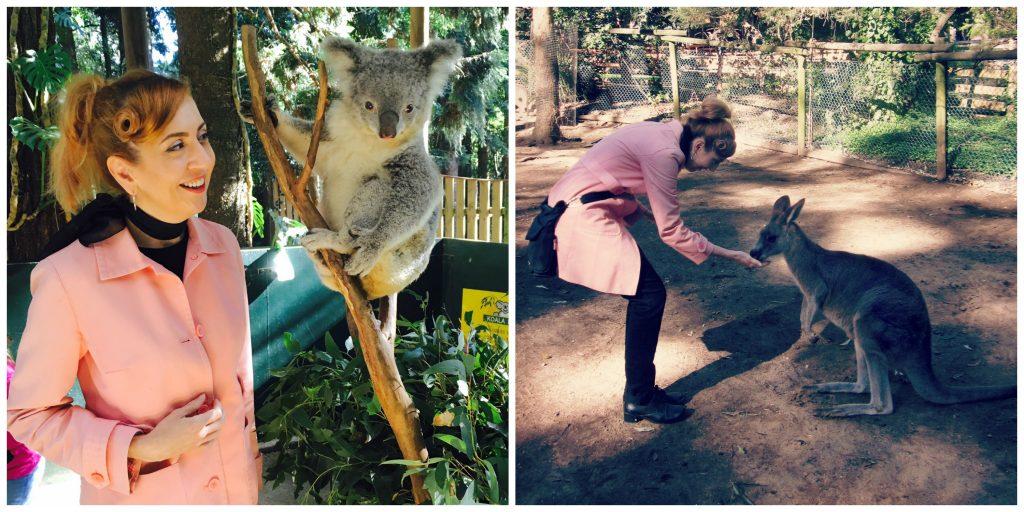 Koala Sanctuary, Sydney Australia