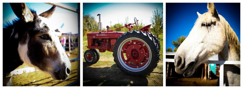 YaYa Farm Animals and Tractor