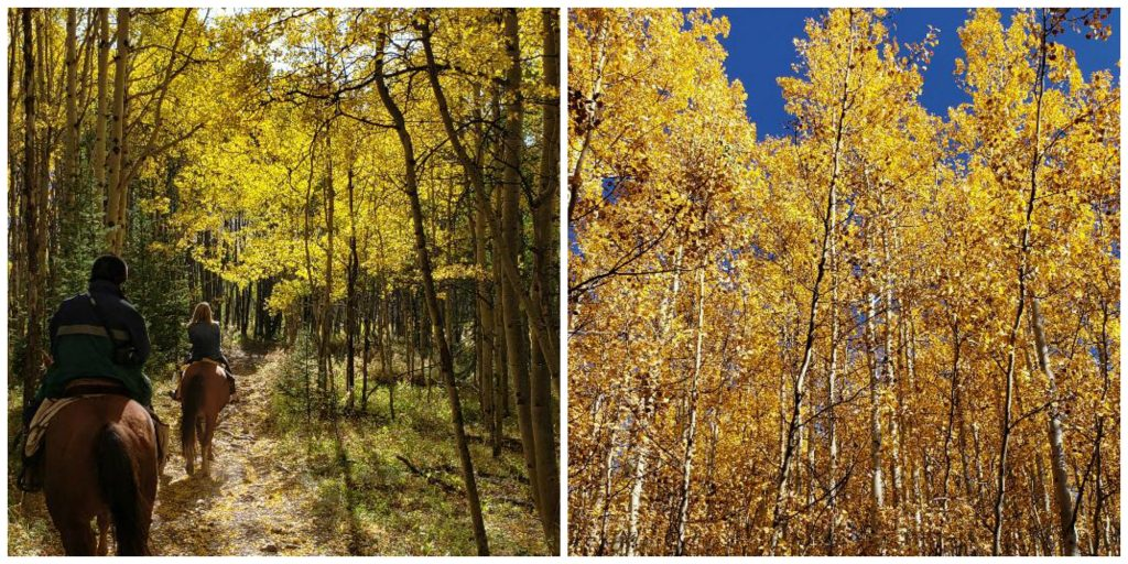 Leadville Aspen Groves in Fall
